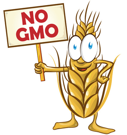 coeliac: wheat cartoon with signboard no gmo isolated on white  background