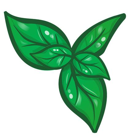 4 811 basil leaf stock vector illustration and royalty free basil rh 123rf com Beans Clip Art Bush Beans Clip Art