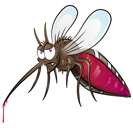 aedes: mosquito  cartoon isolated on white background