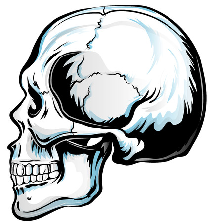 Anatomic Skull Vector Art. Detailed hand-drawn illustration of skull. Grunge weathered illustration. Illustration