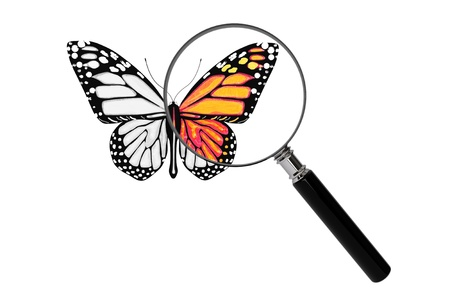 Butterfly with magnifying glass on a white background