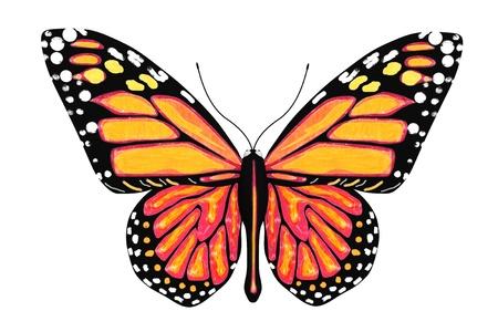 白い背景に黄色とオレンジ色の蝶します。
