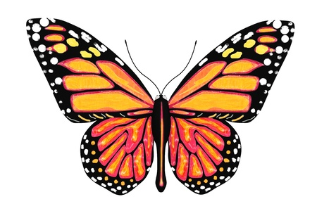 Vlinder met gele en oranje kleuren op een witte achtergrond