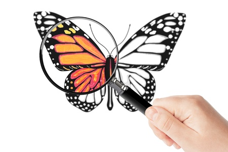 Butterfly and magnifying glass in hand on a white background Stock Photo