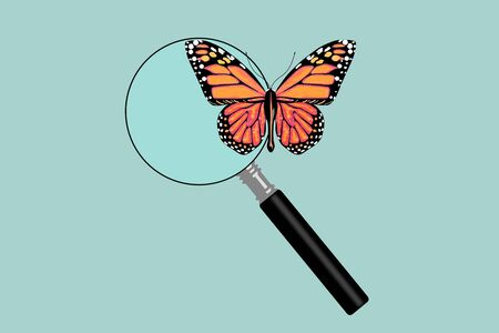 Flat Conceptual Illustration of Butterfly with magnifying glass on a green background