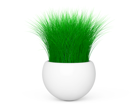 grass isolated: Grass in White Ceramics Planter on a white background. 3d Rendering Stock Photo