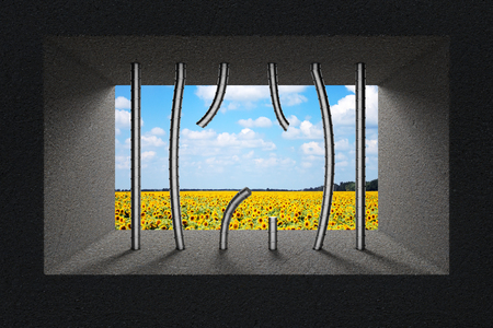 law breaker: Sky and Sunflower Field Seen Through Broken Jail Bars in Prison Window extreme closeup. 3d Rendering.