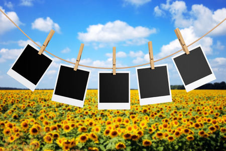 Photo Frames with Clothespins in front of sunflower field. 3d Rendering.