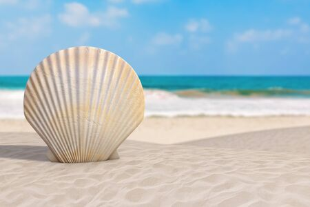 Summer Vacation Concept. Beauty Scallop Sea or Ocean Shell Seashell on an Ocean Deserted Coast extreme closeup. 3d Rendering Фото со стока