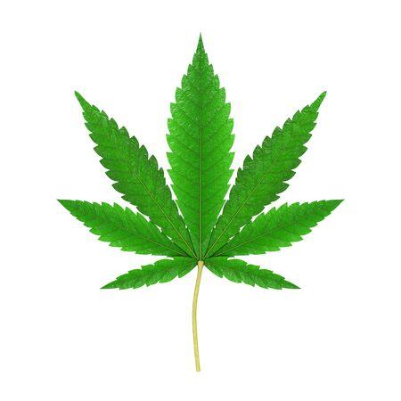 Medical Marijuana or Cannabis Hemp Leaf on a white background. 3d Rendering Standard-Bild