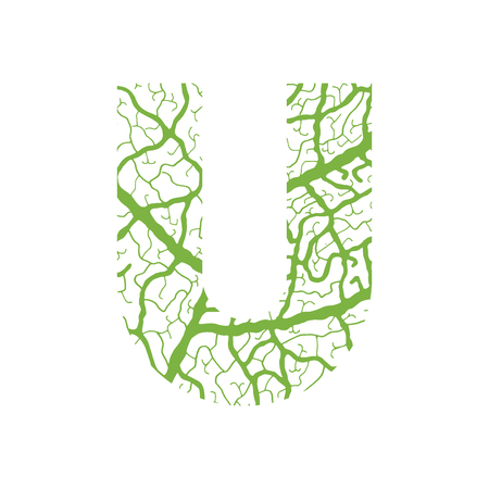Nature alphabet, ecology decorative font. Capital letter U filled with leaf veins pattern green background. Leaves texture hand draw nature alphabet. Vector illustration.