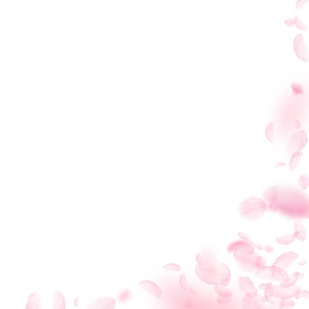Sakura petals falling down. Romantic pink flowers corner. Flying petals on white square background. Love, romance concept. Resplendent wedding invitation.