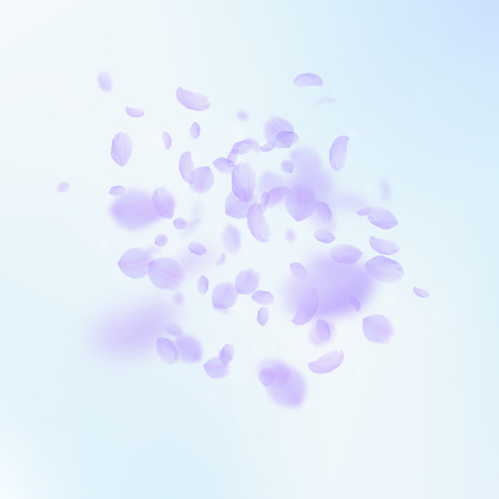 Violet flower petals falling down. Popular romantic flowers explosion. Flying petal on blue sky square background. Love, romance concept. Attractive wedding invitation.