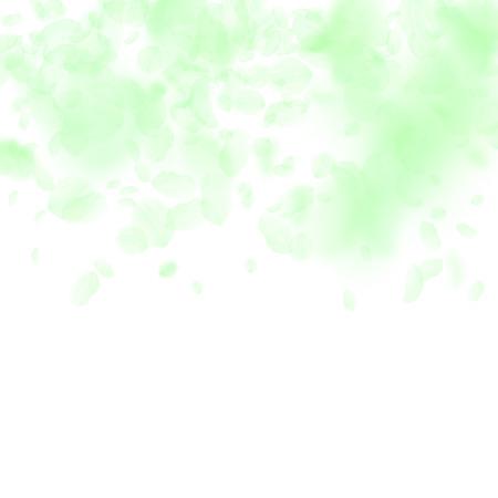 Green flower petals falling down. Surprising romantic flowers gradient. Flying petal on white square background. Love, romance concept. Bizarre wedding invitation. Illusztráció