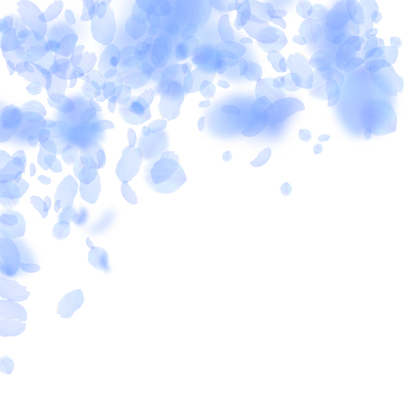 Dark blue flower petals falling down. Vibrant romantic flowers falling rain. Flying petal on white square background. Love, romance concept. Beauteous wedding invitation.