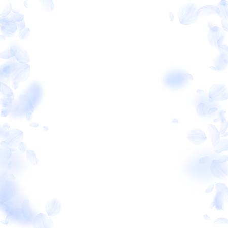 Light blue flower petals falling down. Impressive romantic flowers borders. Flying petal on white square background. Love, romance concept. Actual wedding invitation.