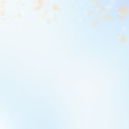 Yellow orange flower petals falling down. Superb romantic flowers gradient. Flying petal on blue sky square background. Love, romance concept. Captivating wedding invitation.