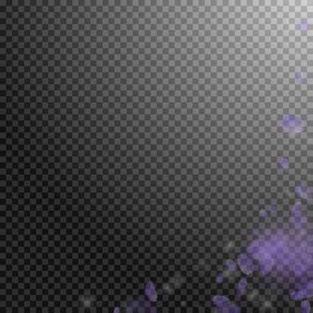 Violet flower petals falling down. Actual romantic flowers corner. Flying petal on transparent square background. Love, romance concept. Adorable wedding invitation.