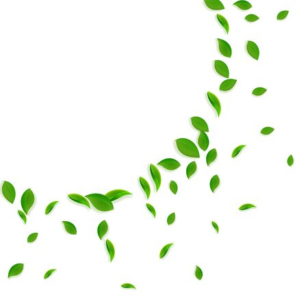 Falling green leaves. Fresh tea chaotic leaves flying. Spring foliage dancing on white background. Actual summer overlay template. Brilliant spring sale vector illustration.  イラスト・ベクター素材