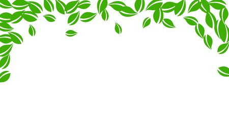 Falling green leaves. Fresh tea neat leaves flying. Spring foliage dancing on white background. Amusing summer overlay template. Delicate spring sale vector illustration.