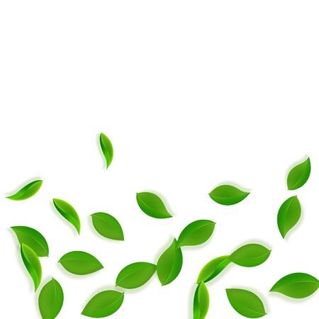 Falling green leaves. Fresh tea neat leaves flying. Spring foliage dancing on white background. Adorable summer overlay template. Ideal spring sale vector illustration.
