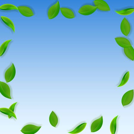 Falling green leaves. Fresh tea neat leaves flying. Spring foliage dancing on blue sky background. Adorable summer overlay template. Fair spring sale vector illustration.