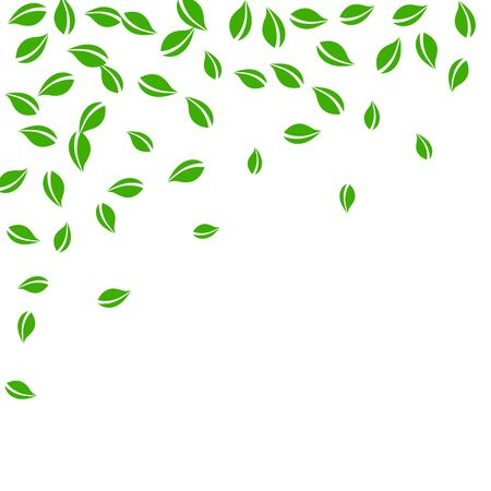 Falling green leaves. Fresh tea random leaves flying. Spring foliage dancing on white background. Admirable summer overlay template. Majestic spring sale vector illustration. Stok Fotoğraf - 149366353