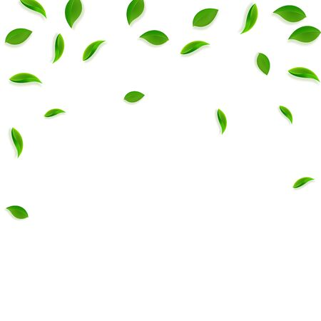 Falling green leaves. Fresh tea random leaves flying. Spring foliage dancing on white background. Admirable summer overlay template. Delicate spring sale vector illustration.
