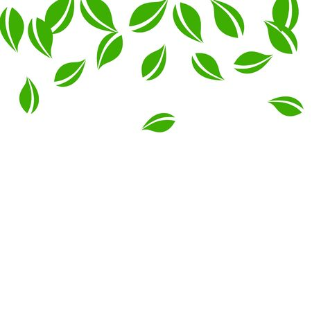 Falling green leaves. Fresh tea neat leaves flying. Spring foliage dancing on white background. Alive summer overlay template. Authentic spring sale vector illustration.