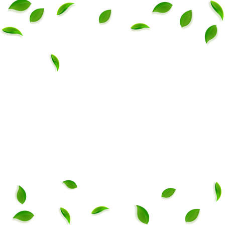 Falling green leaves. Fresh tea random leaves flying. Spring foliage dancing on white background. Admirable summer overlay template. Gorgeous spring sale vector illustration.