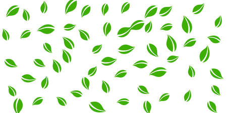 Falling green leaves. Fresh tea neat leaves flying. Spring foliage dancing on white background. Amazing summer overlay template. Outstanding spring sale vector illustration.