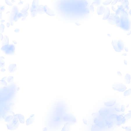 Light blue flower petals falling down. Nice romantic flowers vignette. Flying petal on white square background. Love, romance concept. Dazzling wedding invitation.