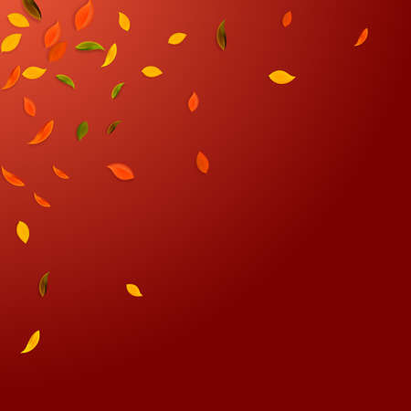 Falling autumn leaves. Red, yellow, green, brown chaotic leaves flying. Corner colorful foliage on magnetic red background. Bold back to school sale.