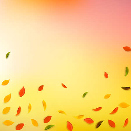 Falling autumn leaves. Red, yellow, green, brown random leaves flying. Falling rain colorful foliage on mind-blowing sunset background. Authentic back to school sale.