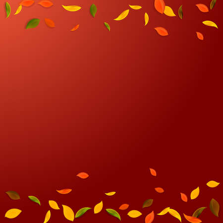 Falling autumn leaves. Red, yellow, green, brown chaotic leaves flying. Borders colorful foliage on imaginative red background. Attractive back to school sale.
