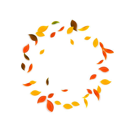 Falling autumn leaves. Red, yellow, green, brown chaotic leaves flying. Frame colorful foliage on nice white background. Breathtaking back to school sale.