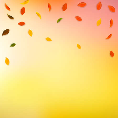Falling autumn leaves. Red, yellow, green, brown random leaves flying. Falling rain colorful foliage on graceful sunset background. Breathtaking back to school sale.