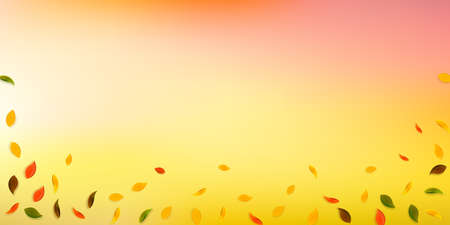 Falling autumn leaves. Red, yellow, green, brown random leaves flying. Falling rain colorful foliage on stunning white background. Captivating back to school sale. Vettoriali