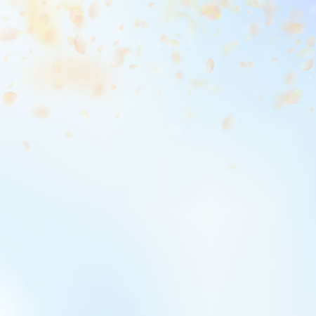 Yellow orange flower petals falling down. Extraordinary romantic flowers gradient. Flying petal on blue sky square background. Love, romance concept. Cool wedding invitation.  イラスト・ベクター素材