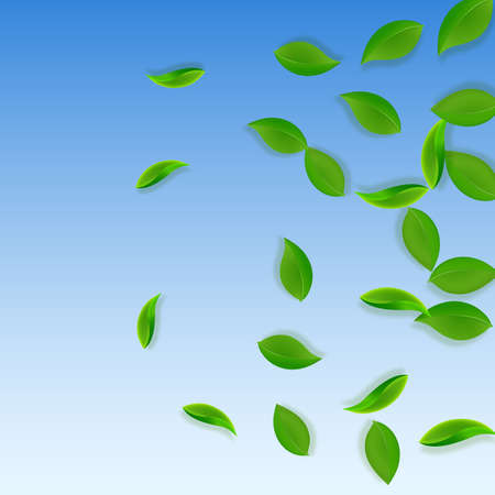 Falling green leaves. Fresh tea neat leaves flying. Spring foliage dancing on blue sky background. Alive summer overlay template. Emotional spring sale vector illustration.  イラスト・ベクター素材