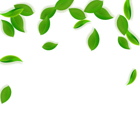 Falling green leaves. Fresh tea neat leaves flying. Spring foliage dancing on white background. Admirable summer overlay template. Cool spring sale vector illustration.  イラスト・ベクター素材