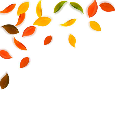 Falling autumn leaves. Red, yellow, green, brown neat leaves flying. Falling rain colorful foliage on resplendent white background. Authentic back to school sale. Иллюстрация