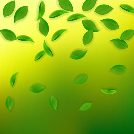 Falling green leaves. Fresh tea neat leaves flying. Spring foliage dancing on yellow green background. Alive summer overlay template. Ravishing spring sale vector illustration.