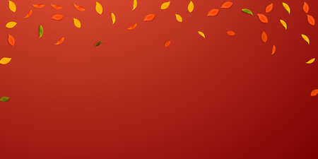 Falling autumn leaves. Red, yellow, green, brown random leaves flying. Falling rain colorful foliage on immaculate red background. Beauteous back to school sale.