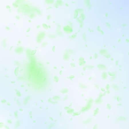Green flower petals falling down. Splendid romantic flowers falling rain. Flying petal on blue sky square background. Love, romance concept. Beautiful wedding invitation.