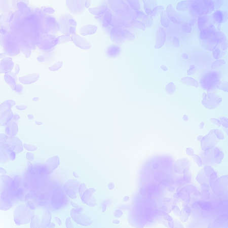 Violet flower petals falling down. Incredible romantic flowers vignette. Flying petal on blue sky square background. Love, romance concept. Cute wedding invitation.