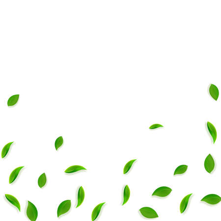 Falling green leaves. Fresh tea random leaves flying. Spring foliage dancing on white background. Admirable summer overlay template. Extra spring sale vector illustration.