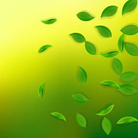 Falling green leaves. Fresh tea neat leaves flying. Spring foliage dancing on yellow green background. Alive summer overlay template. Energetic spring sale vector illustration.