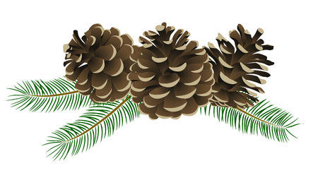 fall winter: Conifer cone Illustration