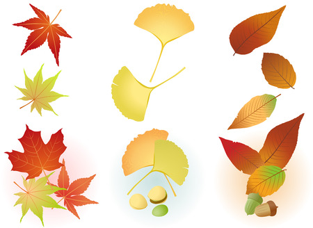 Fall Leaf(Maple,Ginkgo,Acorn)